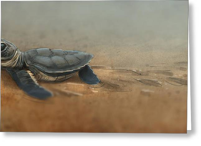 Sea Turtle Greeting Cards - Baby Turtle Greeting Card by Aaron Blaise