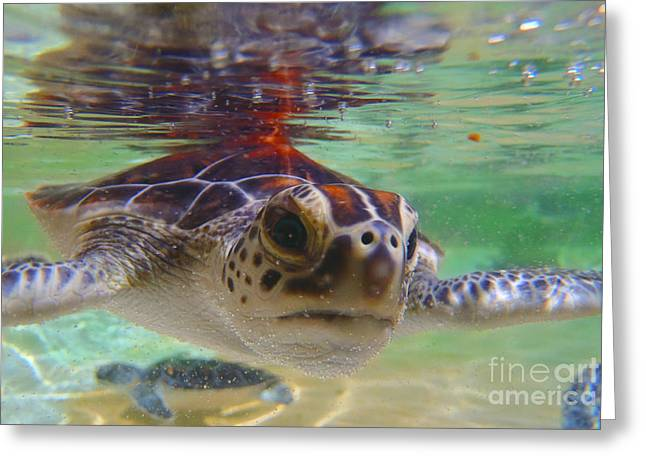 Green Turtle Greeting Cards - Baby turtle Greeting Card by Carey Chen