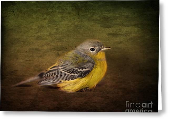 Warbler Photographs Greeting Cards - Baby Warbler Greeting Card by Jai Johnson