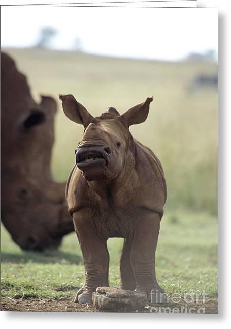 Rhinoceros Greeting Cards - Baby White Rhino Greeting Card by Mark Newman