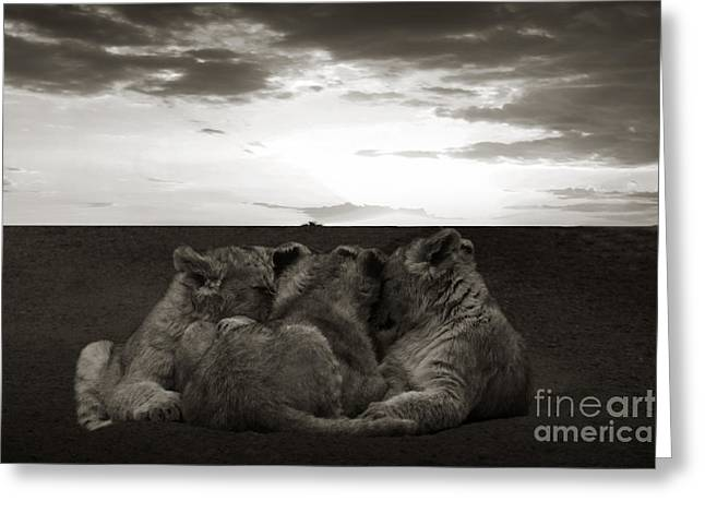 Lioness Greeting Cards - Babylions Greeting Card by Christine Sponchia