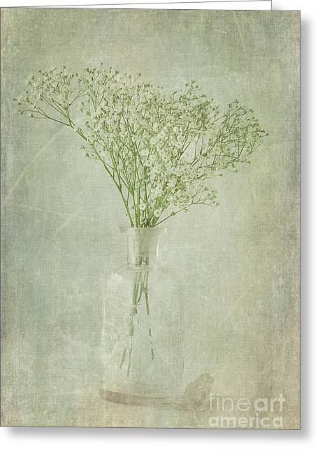 Cindi Ressler Greeting Cards - Babys Breath Greeting Card by Cindi Ressler