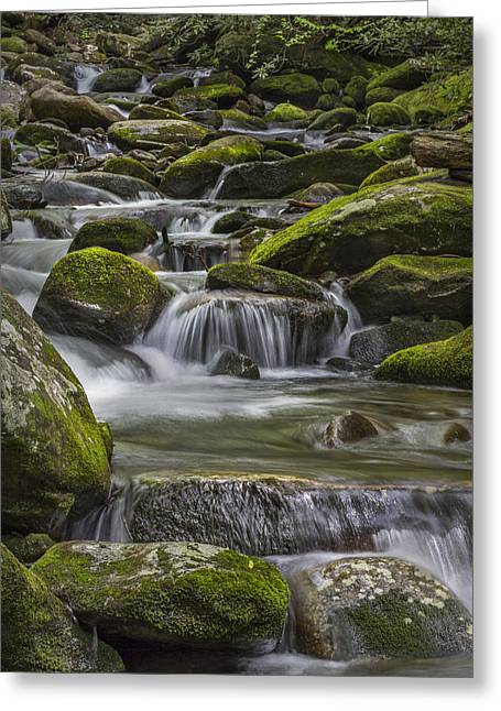 Smokey Mountains Greeting Cards - Back Country Stream Greeting Card by Jon Glaser