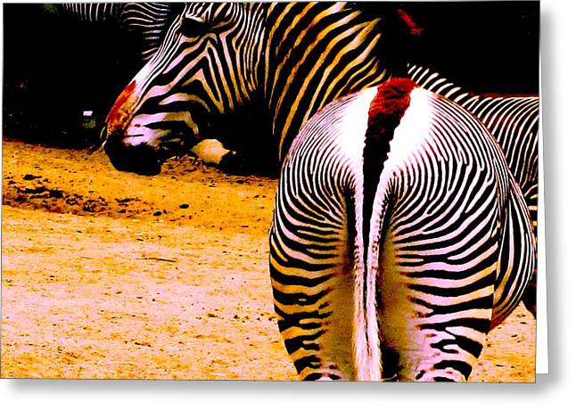 Zebra Greeting Cards Greeting Cards - Back end of a Zebra Greeting Card by Margaret Glenn