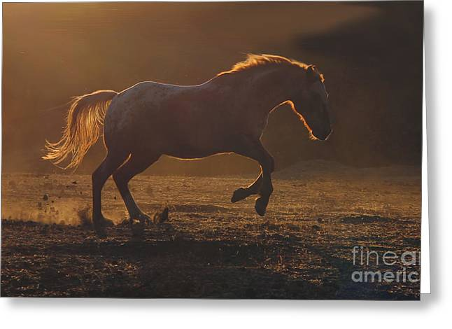 Quarter Horse Greeting Cards - Back Light Greeting Card by Stephanie Laird