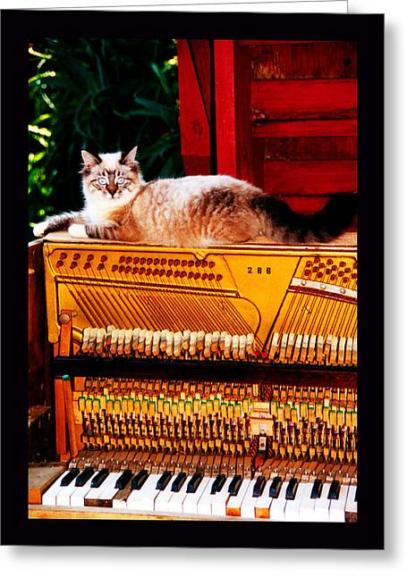 Cat On Back Greeting Cards - Back Porch in Paradise Greeting Card by Susanne Still
