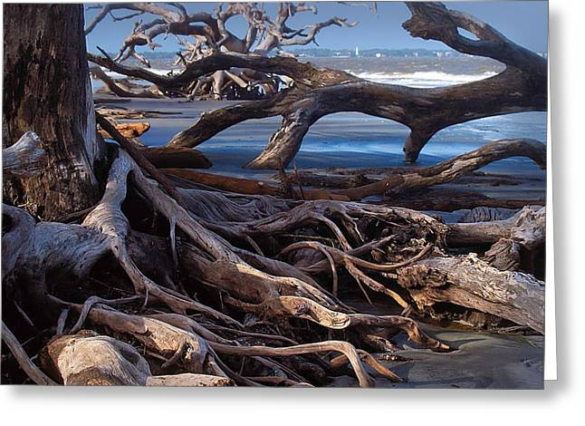 Tidal Photographs Greeting Cards - Back Rest Greeting Card by Laura Ragland