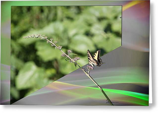 Tiger Swallowtail Digital Art Greeting Cards - Back to Reality Greeting Card by EricaMaxine  Price