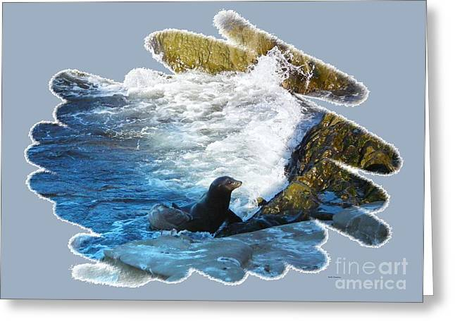 Elephant Seals Greeting Cards - Back to the Rocks Greeting Card by Scott Cameron