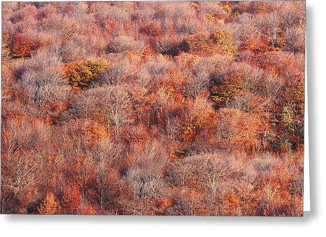 Vibrant Green Greeting Cards - Background Of Autumn Forest Greeting Card by Mikel Martinez de Osaba