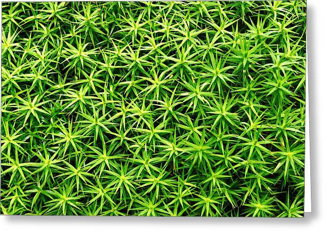Small Floral Greeting Cards - Background Of Plant Leaves Pattern Greeting Card by Mikel Martinez de Osaba