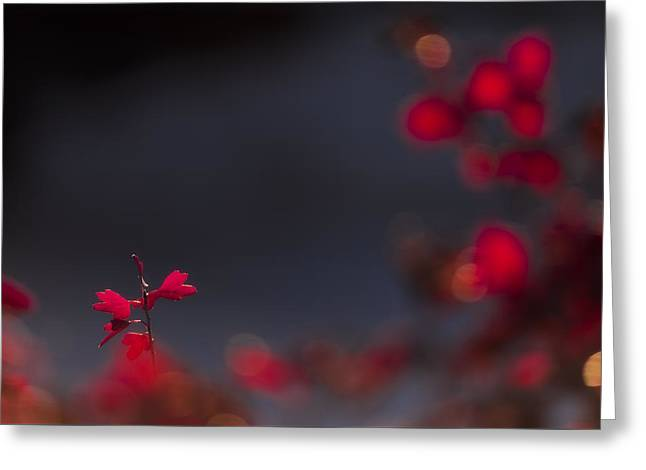 Backlight Greeting Card by Chad Dutson