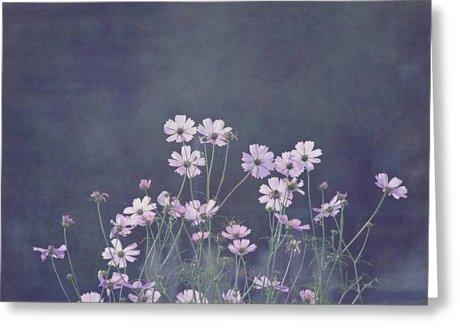 Kim Photographs Greeting Cards - Backlight - Cosmos Flowers Greeting Card by Kim Hojnacki