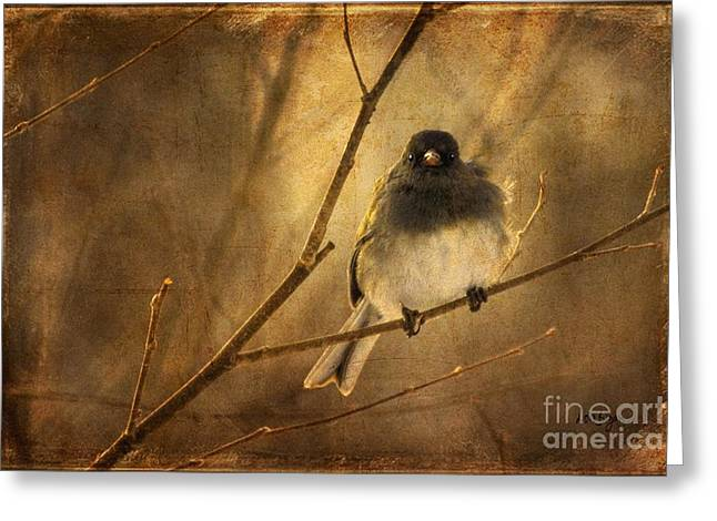 Gray Bird Greeting Cards - Backlit Birdie Being Buffeted  Greeting Card by Lois Bryan