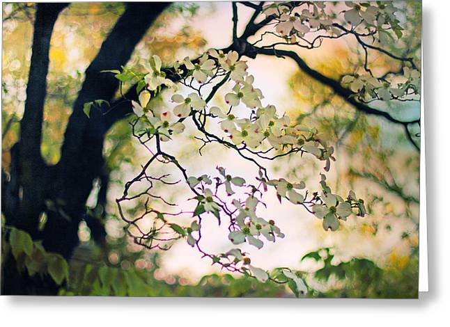 Blossoming Cherry Tree Greeting Cards - Backlit Blossom Greeting Card by Jessica Jenney