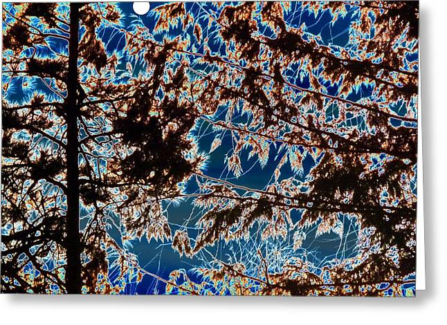 Backlit Digital Greeting Cards - Backlit By A Full Moon Greeting Card by Will Borden