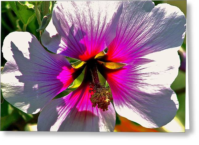 Fauna Pyrography Greeting Cards - Backlit Hibiscus Greeting Card by DUG Harpster