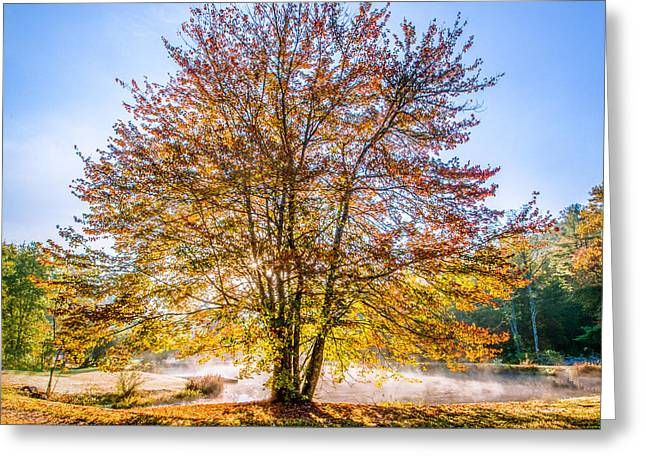 North Carolina Greeting Cards - Backlit Maple Greeting Card by Rob Travis
