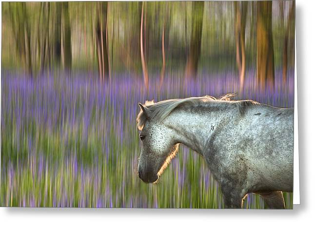 Vivid Colour Greeting Cards - Backlit pony walking through blurred bluebell forest fantasy the Greeting Card by Matthew Gibson