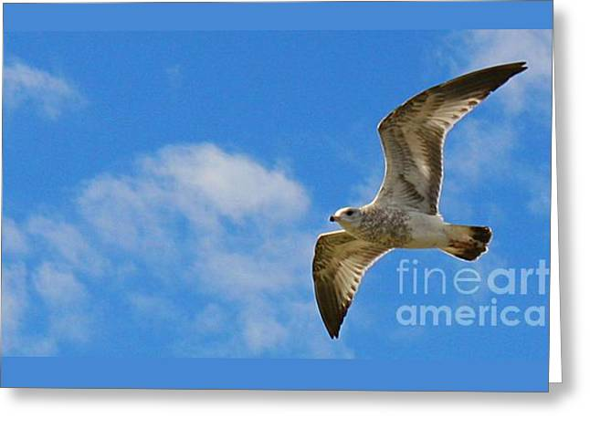 Flying Seagull Greeting Cards - Backlit Seagull Greeting Card by Brenda McGee-Paap