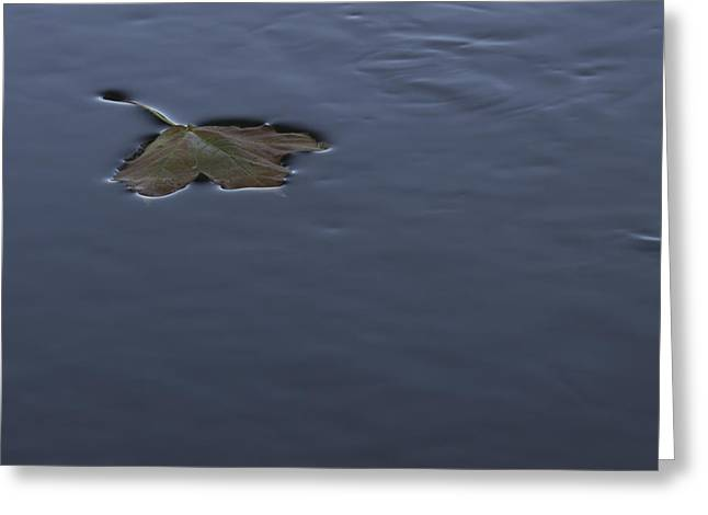 Fallen Leaf On Water Greeting Cards - Backstroke Greeting Card by Greg Thiemeyer