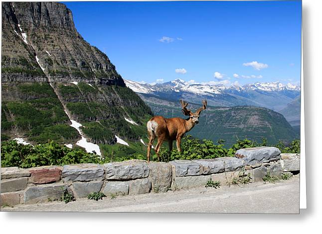 Photos For Sale Greeting Cards - Backwards Glance Greeting Card by Aaron Aldrich