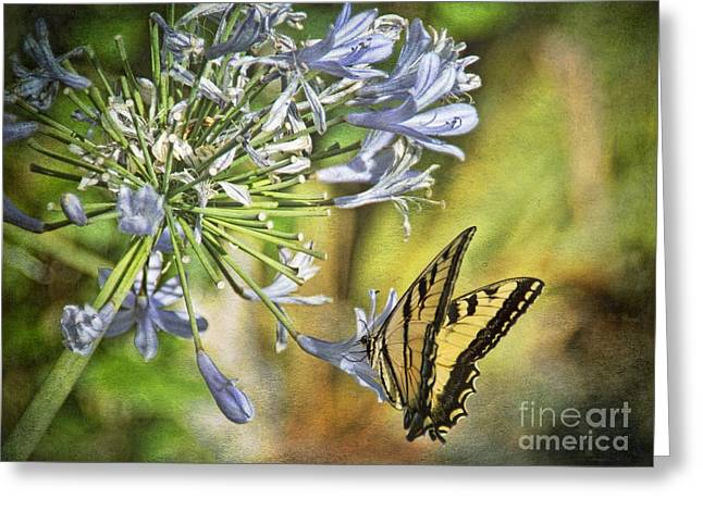 Backyard Nature Greeting Card by Peggy Hughes