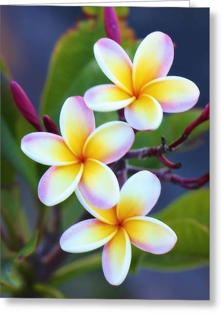 Backyard Plumeria Greeting Card by Jade Moon