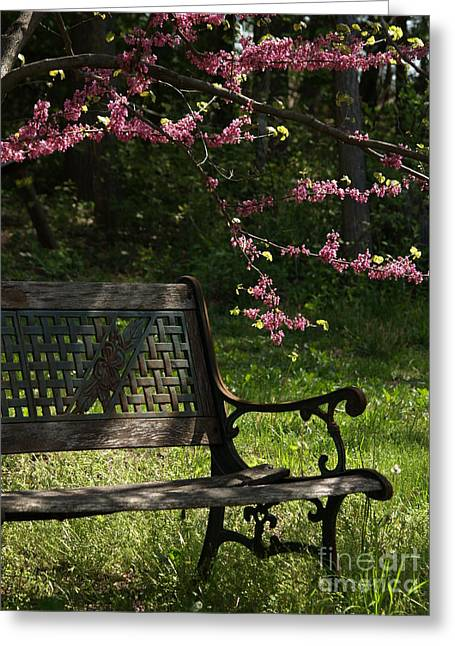 Cercis Greeting Cards - Backyard Tranquility with Redbud Greeting Card by Anna Lisa Yoder