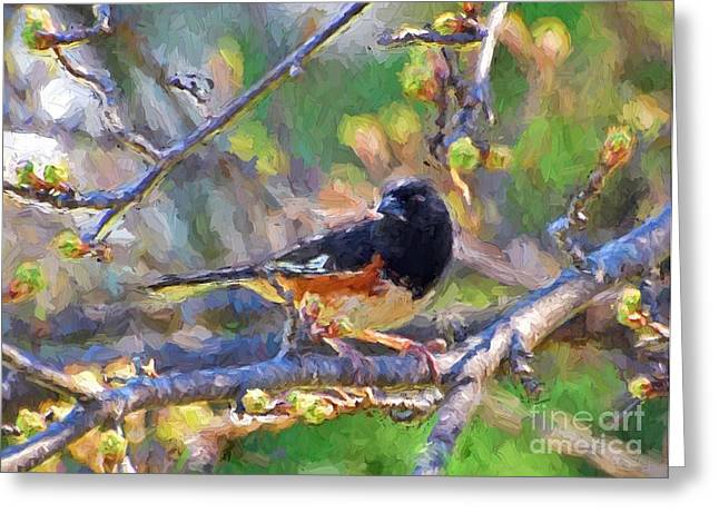 Brown Towhee Greeting Cards - Backyard Visitor Greeting Card by Kerri Farley