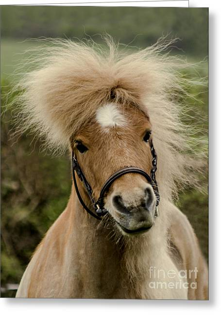 Breeds Greeting Cards - Bad Hair Day 2 Greeting Card by Linsey Williams