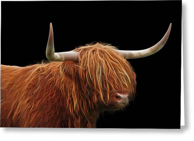 Dairy Farmers And Farming Greeting Cards - Bad Hair Day - Highland Cow - On Black Greeting Card by Gill Billington