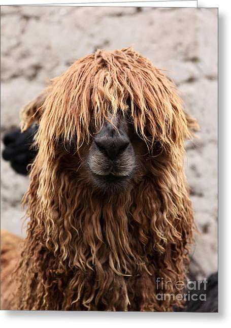 Bad Hair Day Greeting Card by James Brunker