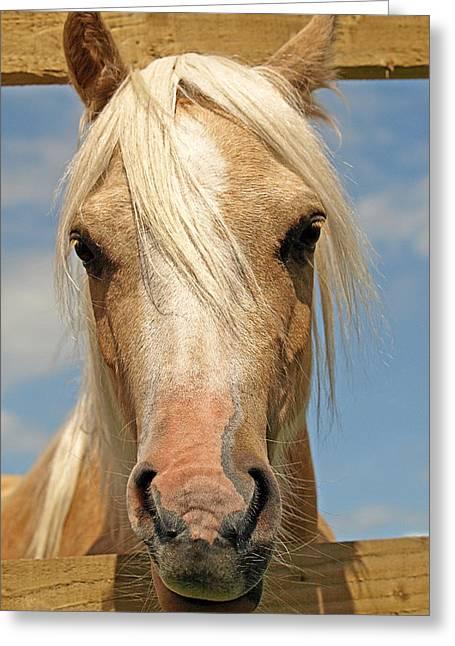 Yearling Horse Greeting Cards - Bad Hair Day - Palamino Greeting Card by Gill Billington