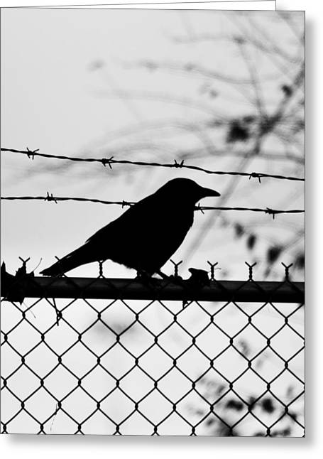 Wire Tree Greeting Cards - Bad Side Of The Fence  Greeting Card by Jerry Cordeiro