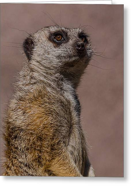 Meerkat Photographs Greeting Cards - Bad Whisker Day Greeting Card by Ernie Echols