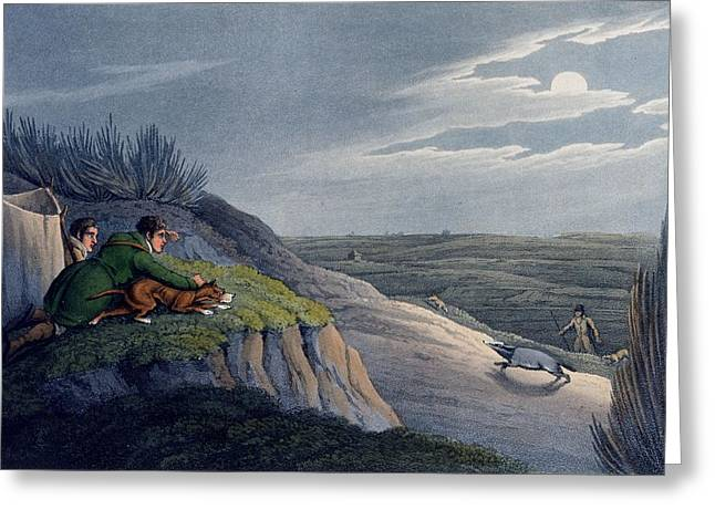 Hound Drawings Greeting Cards - Badger Catching, 1820 Greeting Card by Henry Thomas Alken