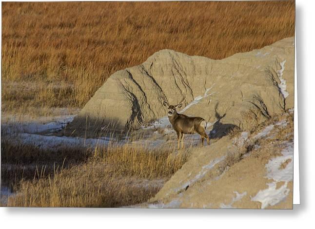 Badlands National Park Greeting Cards - Badlands Buck Greeting Card by Aaron J Groen