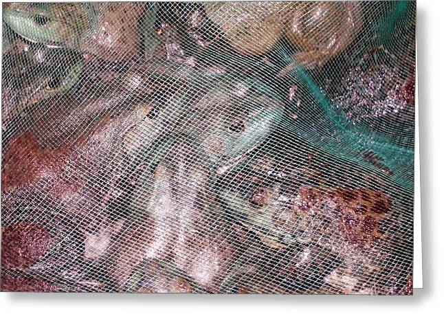 Bag Of  Frogs Greeting Card by Barbie Corbett-Newmin