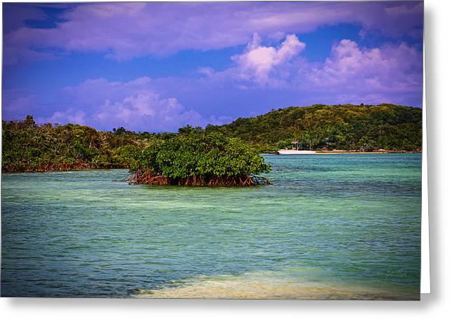 Bahamas-half Moon Cay Lost Lagoon Greeting Card by Eti Reid