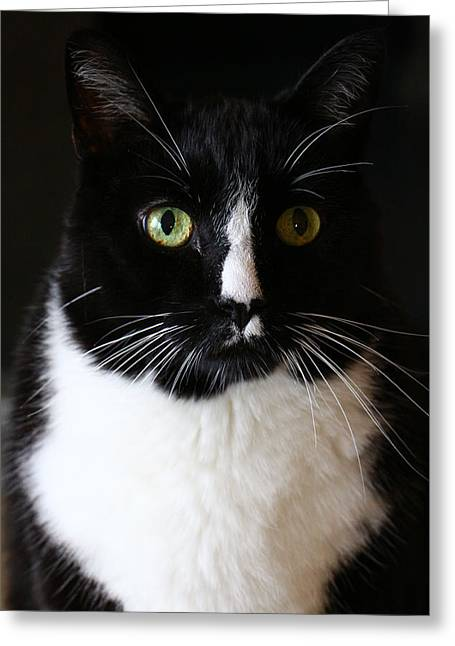 Oreo Photographs Greeting Cards - Bailey Greeting Card by Blake Tumbleson