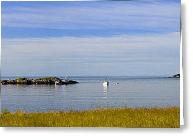 Bailey's Mistake Panorama Greeting Card by Marty Saccone