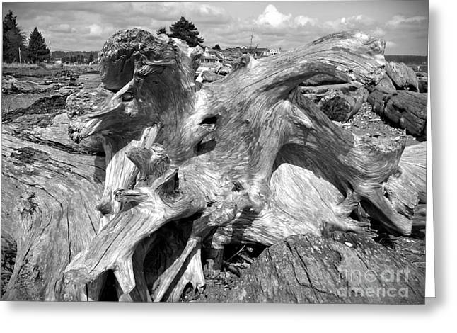 Bainbridge Island Greeting Cards - Bainbridge Island Driftwood Greeting Card by Chalet Roome-Rigdon