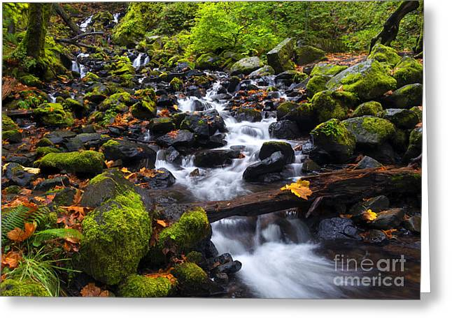 Moss Greeting Cards - Balance  of Autumn Greeting Card by Mike Dawson