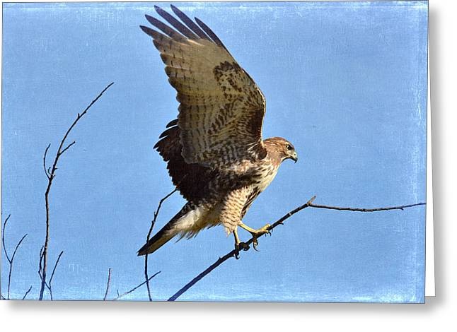 Bird On Tree Greeting Cards - Balancing Act Greeting Card by Fraida Gutovich