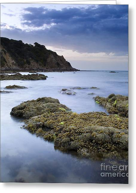 Balcombe Point Mount Martha Greeting Card by Tim Hester