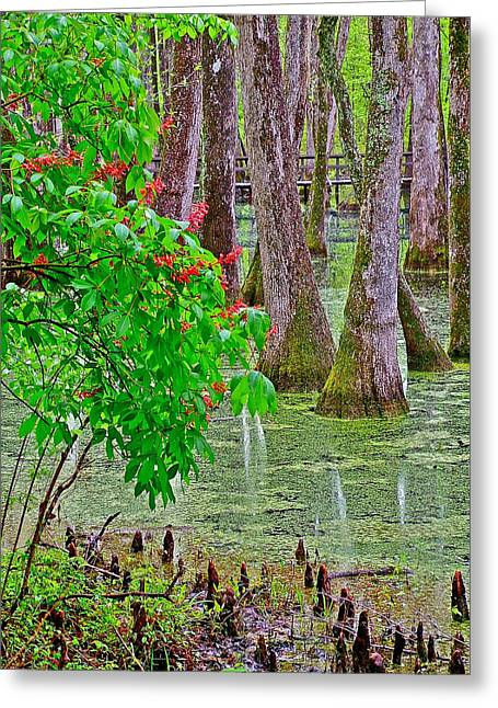 Mile 122 Greeting Cards - Bald Cypress and Red Buckeye Tree at Mile 122 of Natchez Trace Parkway-Mississippi Greeting Card by Ruth Hager