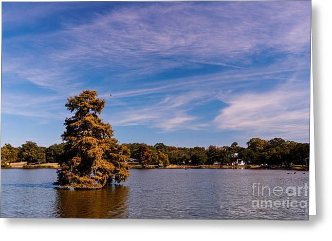 Fall Trees Greeting Cards - Bald Cypress and Wispy Clouds City Park by University Lake - Baton Rouge Louisiana Greeting Card by Silvio Ligutti