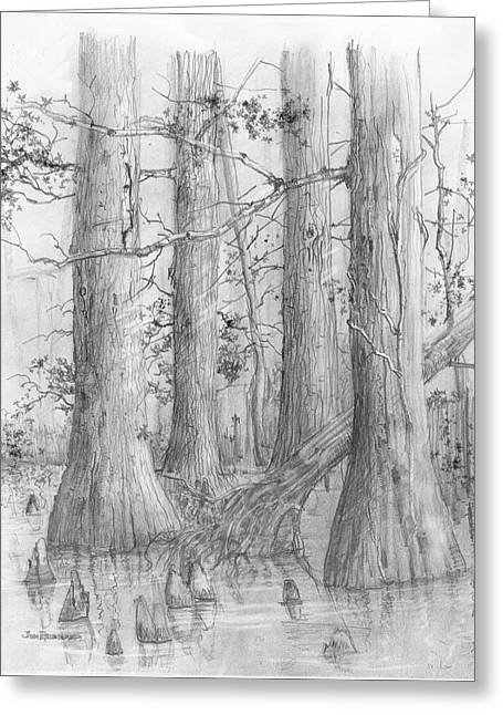 Jim Hubbard Greeting Cards - Bald Cypress Greeting Card by Jim Hubbard