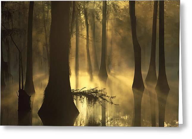 Bald Cypress Greeting Cards - Bald Cypress Swamp at Dawn Greeting Card by Tim Fitzharris